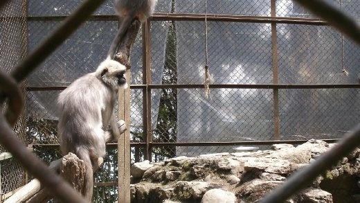 Darjeeling Zoo