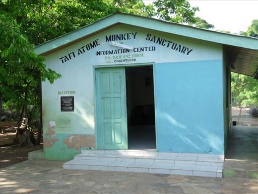 Monkey Business at Tafi Atome, Ghana #1