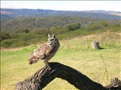 Owl at the Bird Sanctuary: by pen-eddie, Views[241]