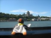 Turn around & the ypu'll see Quebec City Waddle!: by penguinman, Views[146]
