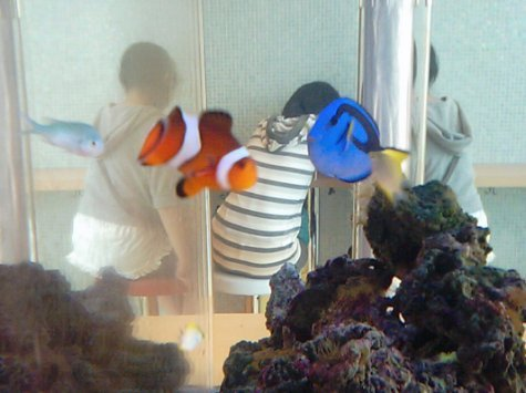 I found Nemo! Or his Dad, I can't tell the difference.