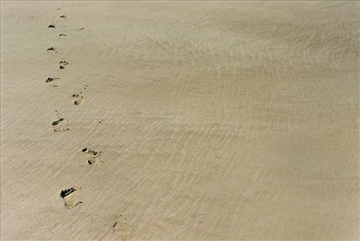 Footsteps in the sands