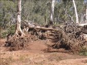 Cyclone damage at Crossing Pool Campground, Millstream: by philandholly, Views[661]