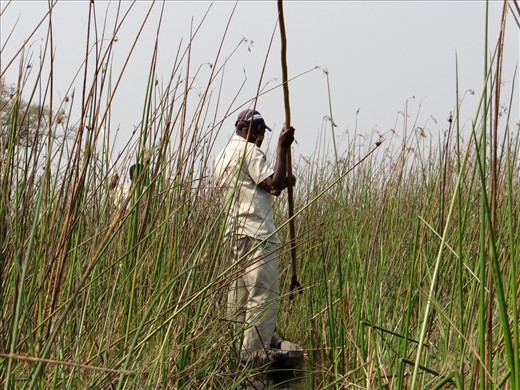 In the mokoro, going through the reeds and getting smacked along the way