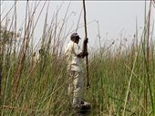 In the mokoro, going through the reeds and getting smacked along the way: by philatravelgirl, Views[259]