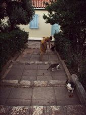 One cat justs leads to another.