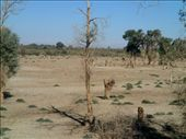 Taklamakan desert huyang trees: by piglet, Views[345]