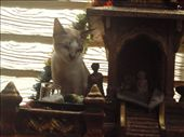 Cat in the Temple: by piratesdreaming, Views[206]