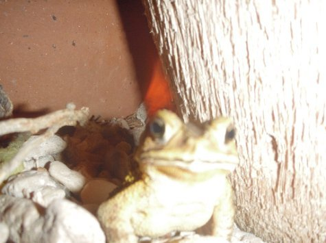 First frog we captured on photo for you James. He was posing!
