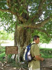 Killing Tree: by pjandc, Views[77]