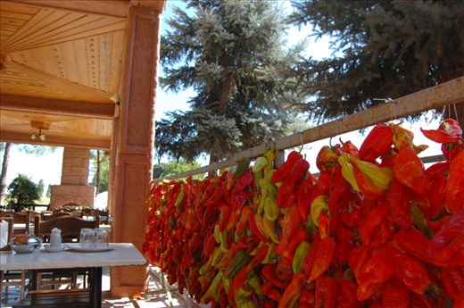 Peppers drying by the hundreds