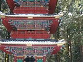 At the Nikko shrines.: by pjscheck, Views[187]