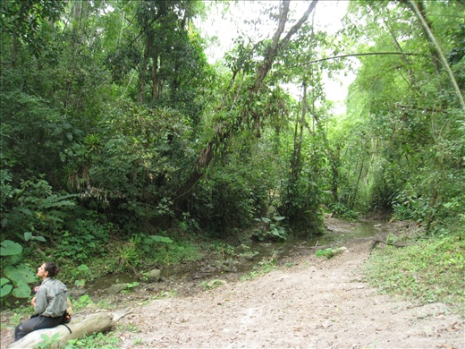 The end of a transect, a beautiful spot with bent bamboo trees hovering over like a canopy.