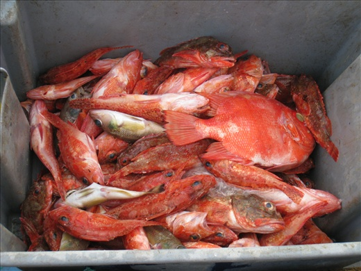 The type of catch I like to see more of at the fish market, the sustainable (and delicious) ones!