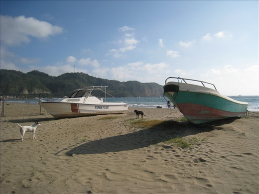 The beach is full of docked fishing boats and stray dogs