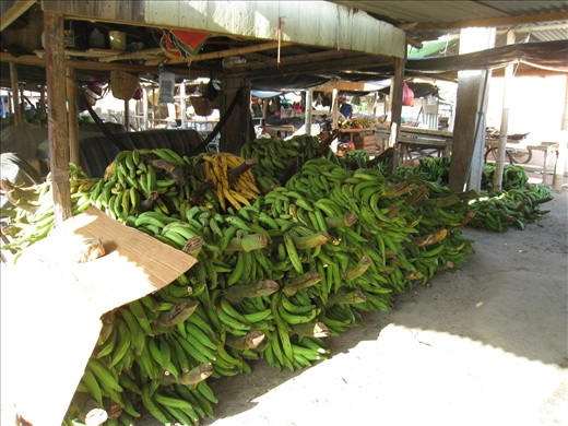 Green bananas at the market, hugely popular with locals, eaten daily.