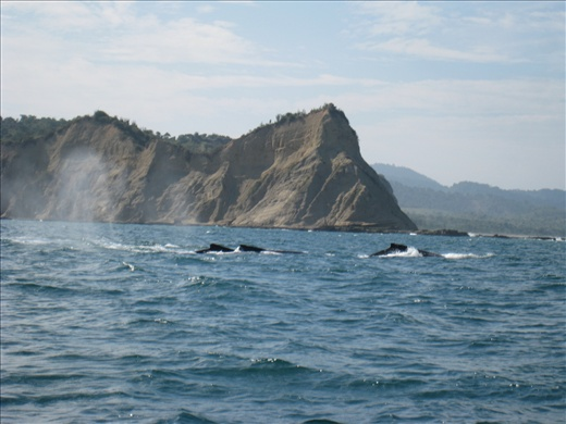 The whales we encountered on the way to my first dive