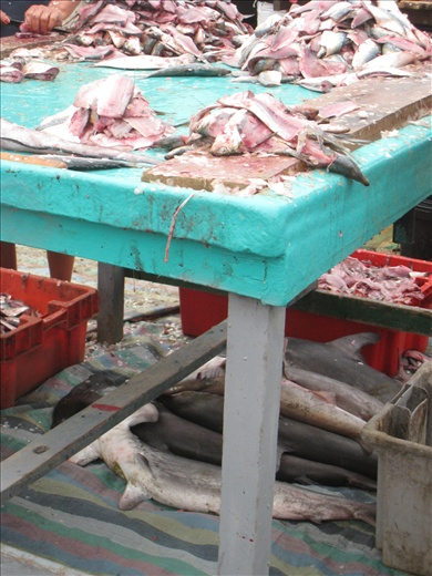 A pile of hammerhead sharks were hidden under the butcher table and behind a crate. Sneaky bastards.