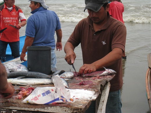 Not sure what kind of fish this is, but as soon as it was cut, the meat is salted to be cured.