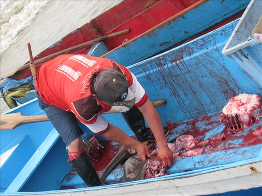 Several rays were cut inside the boat, here is the aftermath: blood and unwanted body parts.