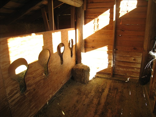 The goat barn after we removed all the old hay on the floor (for compost). This is the eating/sleeping area for Daisy and Coco; the four does eat/sleep in a smaller area, and Buck stays outside.