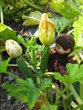 Wish I knew how to prepare squash blossoms!: by pmok, Views[91]