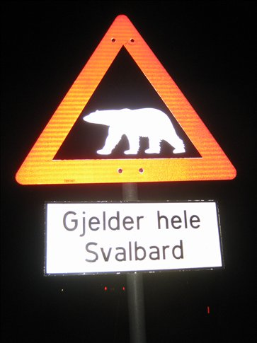 You can bump into polar bears anywhere on Svalbard, so keep a watch out!