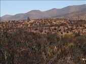 The arid semi desert: by polargirl, Views[397]
