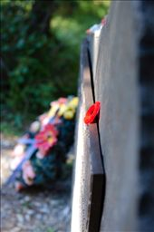 Though not a graveyard, this site earns the same reverence.  Wreaths, flowers, stones and other small objects seem to be routinely left as gifts.  In this image, a lone red plastic flower was left atop the bronze plaque that shared the history of the Castle Mountain Internment Camp in three languages – English, French, and Ukrainian.: by portlandvagabond, Views[323]