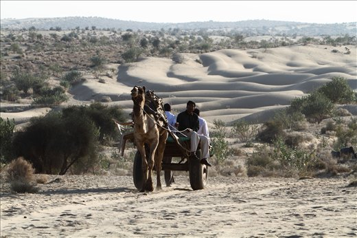 Tourists enjoying camel ride on the desert of Jaisailmer,INDIA.