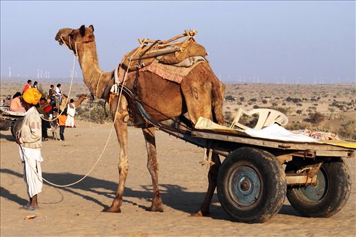An owner with his camel cart waiting for tourists on the deserts of Rajasthan.