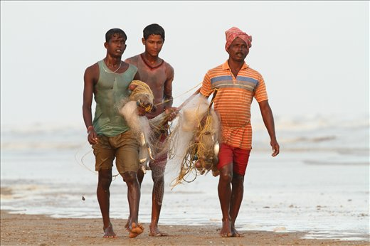 Fishermen returning with their catch from the sea at Tajpur beach,INDIA.