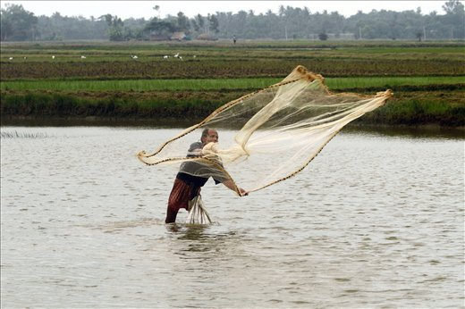 A fisherman throwing his net in a canal running along the approach to Tajpur.