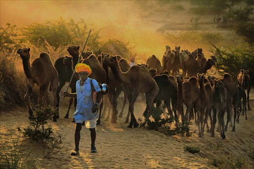The owner is coming to the fair ground from his village in the early morning