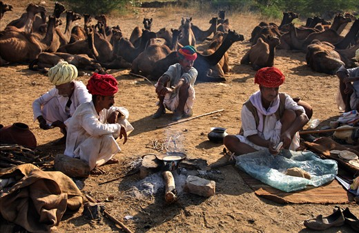 The owners of the camels are preparing their lunch dish