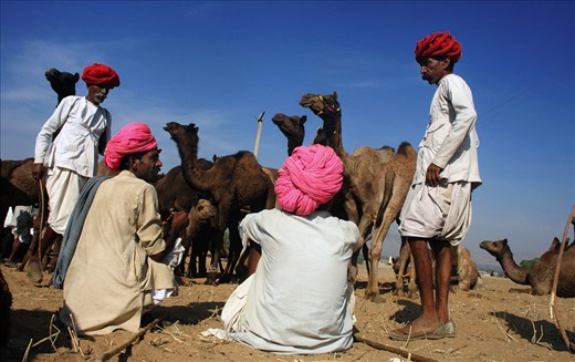 The camel-owners are in gossip when they get leisure during the sale