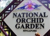 TOMASA IN ORCHID GARDEN SINGAPORE: by protonics, Views[248]