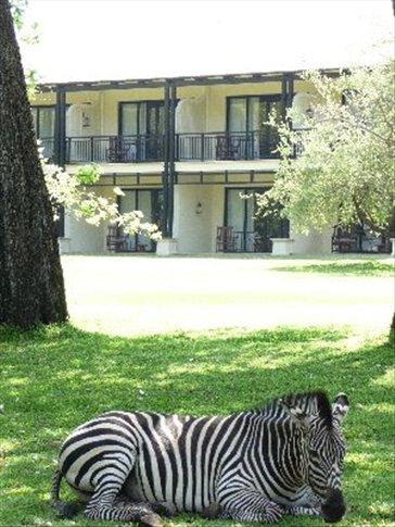 Zebra outside room