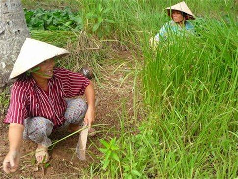 farmers tending their crops