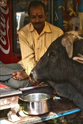 Room For everyone: