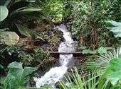 Rainforest Biome: by quando, Views[203]