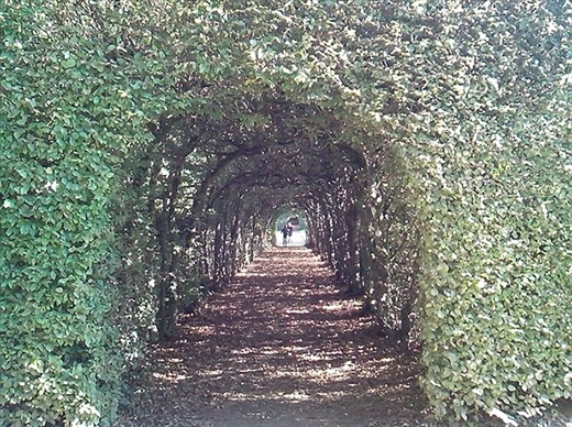 Hedge archway at Rosanbo