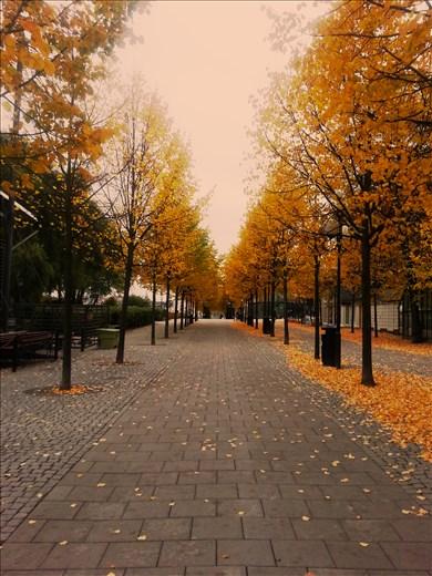 walked through centre autumn season, Stockholm