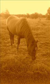 my horse : by rachel7, Views[115]
