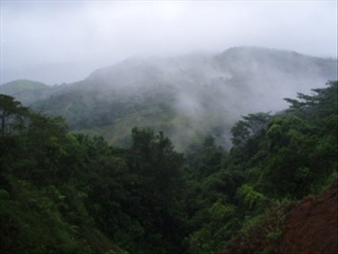 More misty views of rainforest mountains - this time from El Cruce, up the road