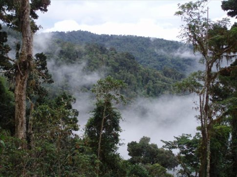 View of the cloud forest from El Mirador, half way across the trail