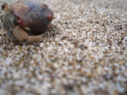 Hermit crab, trying very hard to run away...