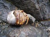 Hermit crab: by rachel_and_daniel, Views[178]