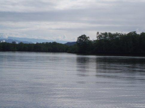 Rio Sierpe - view of Mangrove forest