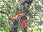 Some of the flowers in canopy, Santa Elena reserve: by rachel_and_daniel, Views[182]